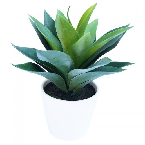 African Agave Potted Plant